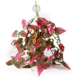 Pangea Plants - Red