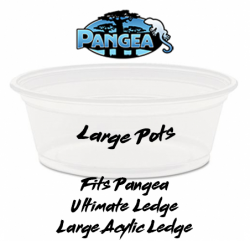 Pangea Large Gecko Feeding...